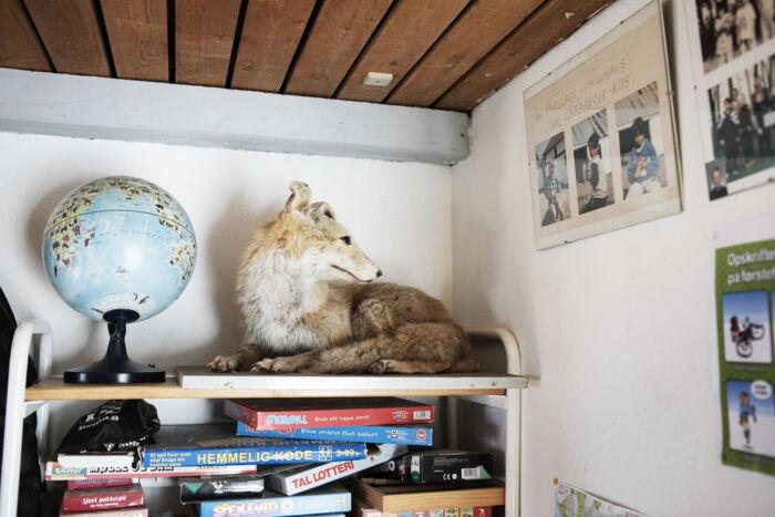 Denne ræv ligger i deres klasselokale.
