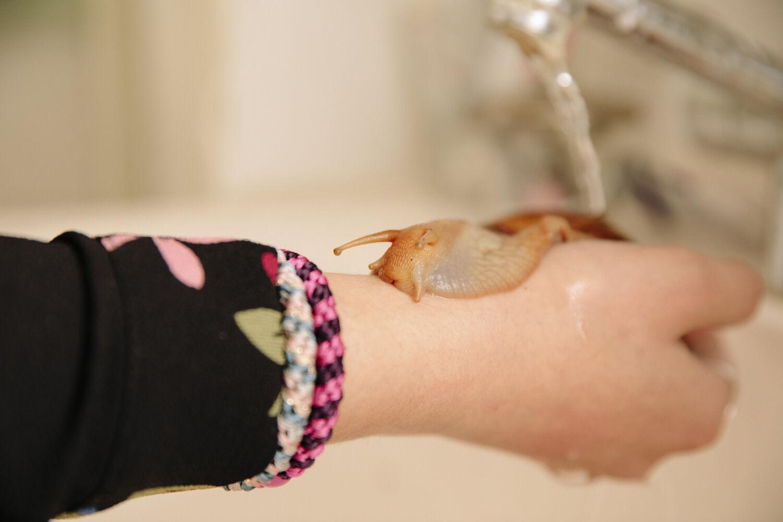 Emmeli behøver ikke at bade sneglene, men de kan godt lide en blid stråle lunkent vand fra vandhanen. Så kommer de ud af skjoldet og strækker hals.