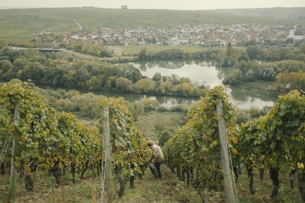 <p>De dyreste druer står på de stejleste skråninger og plukkes i hånden. Hældningen kan være op<br />til 65 procent.</p> Foto: Maximilian Gödecke